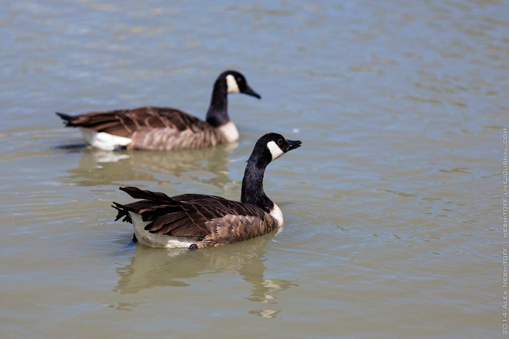 2014-France-Reserve African-Birds-007