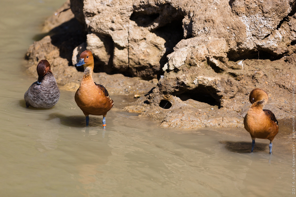 2014-France-Reserve African-Birds-008