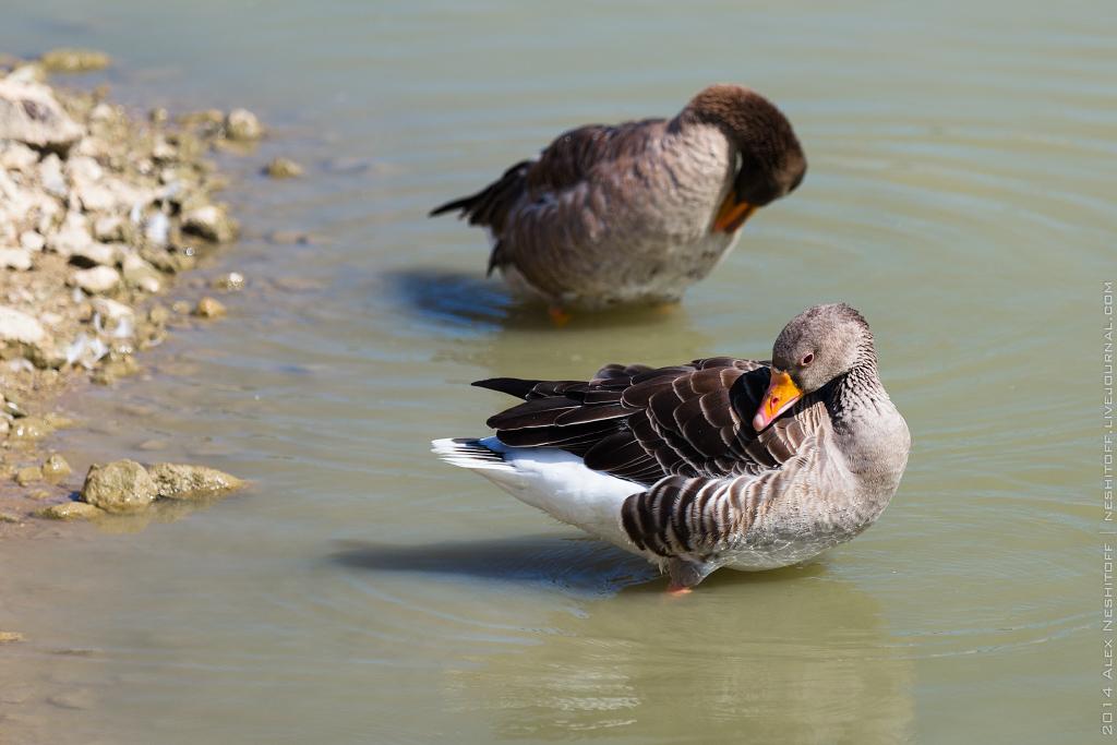 2014-France-Reserve African-Birds-009