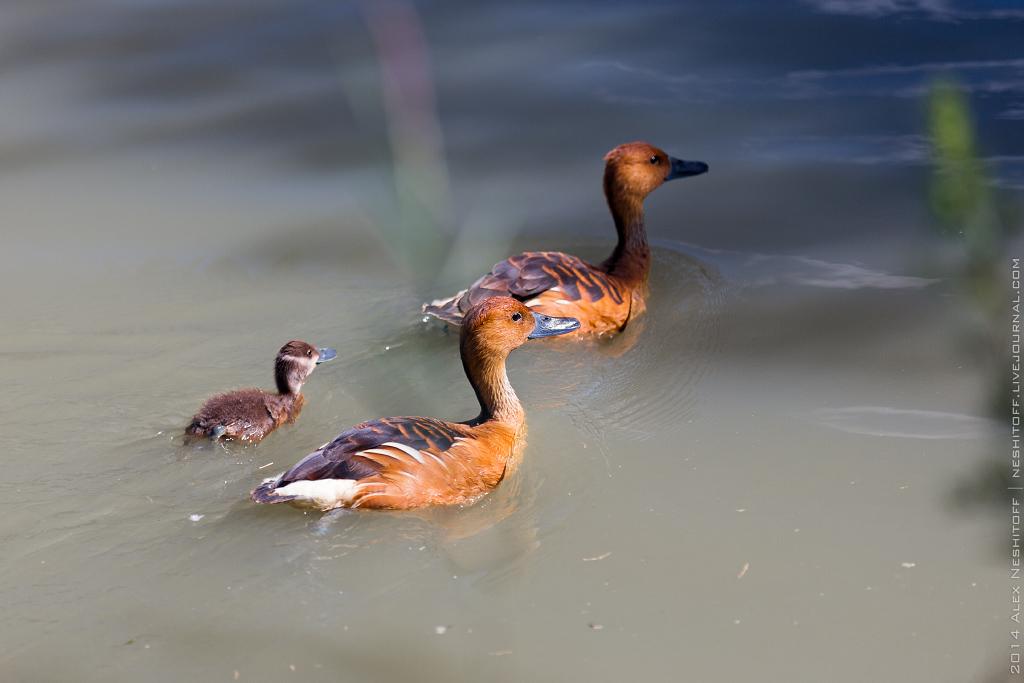 2014-France-Reserve African-Birds-014