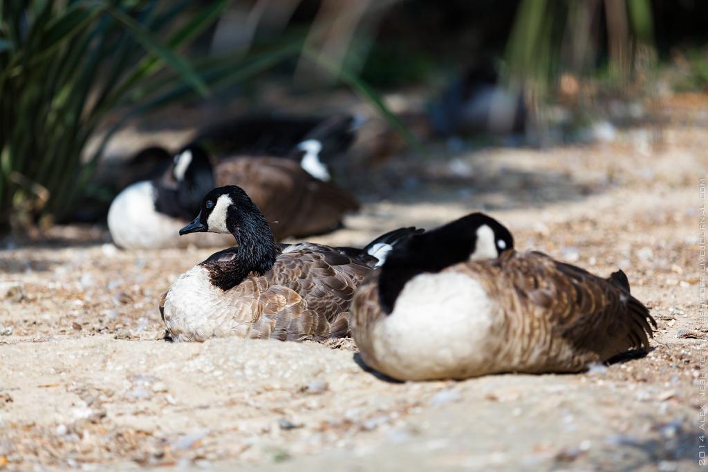 2014-France-Reserve African-Birds-017