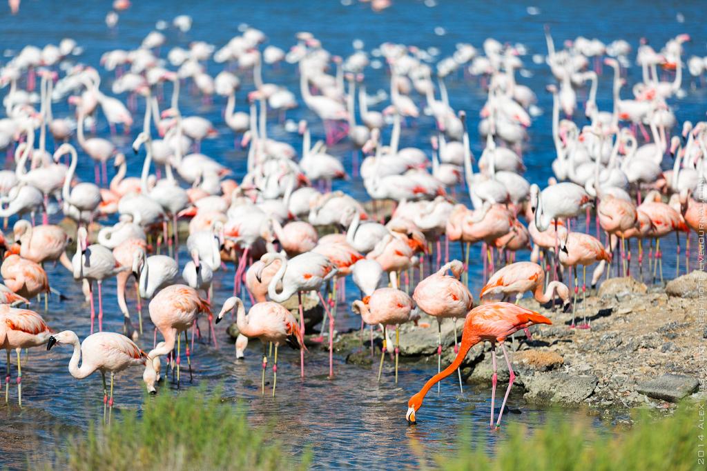 2014-France-Reserve African-Birds-018