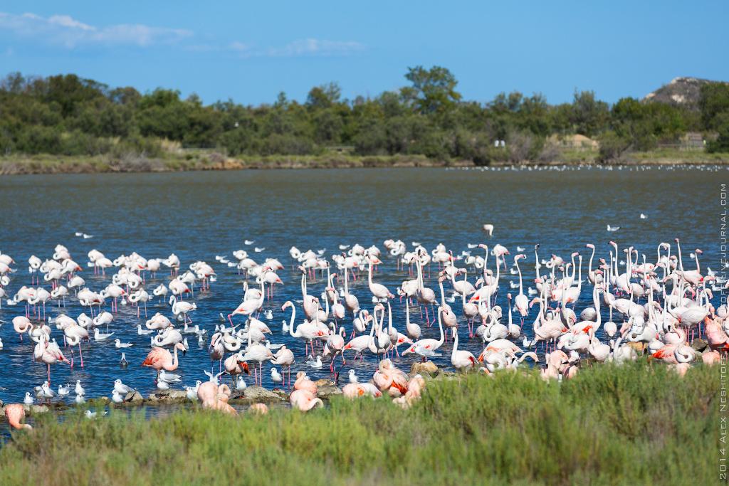 2014-France-Reserve African-Birds-019