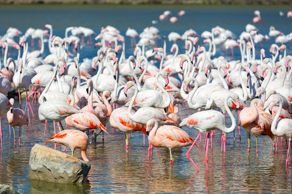 2014-France-Reserve African-Birds-020