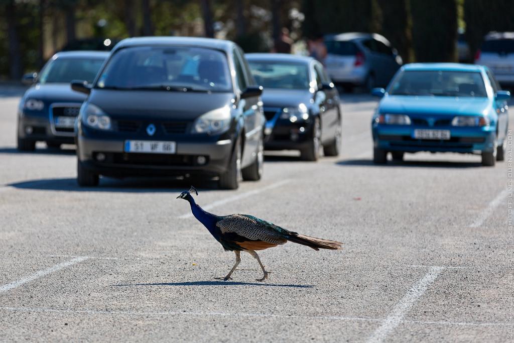 2014-France-Reserve African-Birds-023