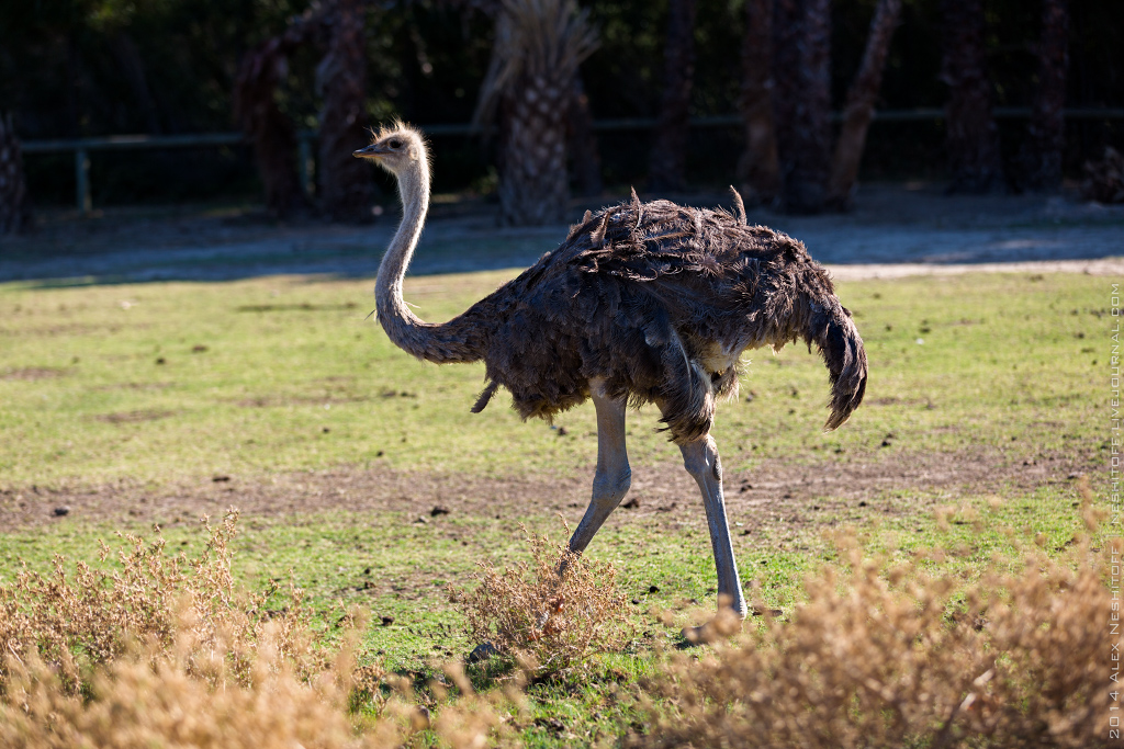 2014-France-Reserve African-Birds-025