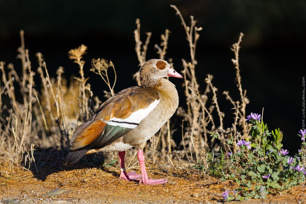 2014-France-Reserve African-Birds-026