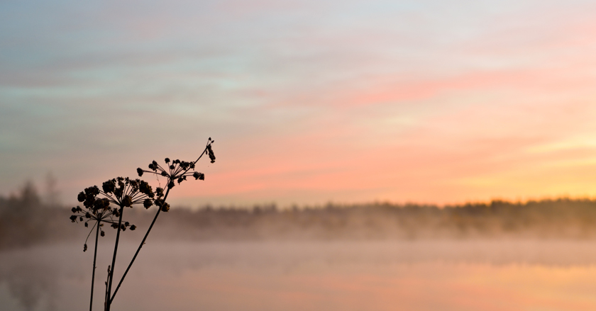 туман31