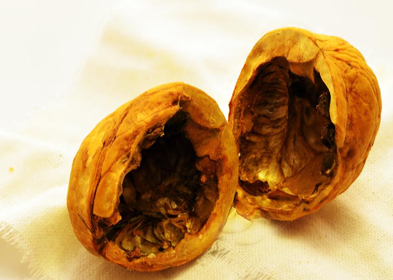 фото орехи