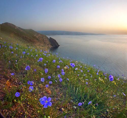 -05-с морем в цвете споря