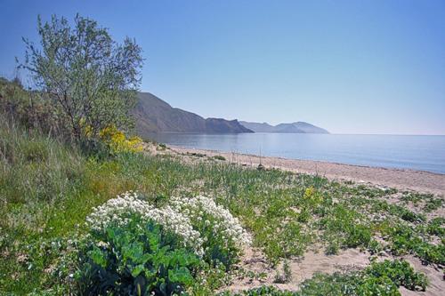 -08-весна на берегу в Тихой бухте