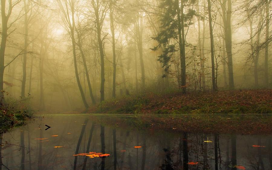landscapes-beauty-mist-landscape-lake-fog-autumn-forest-nature-photo-mobile