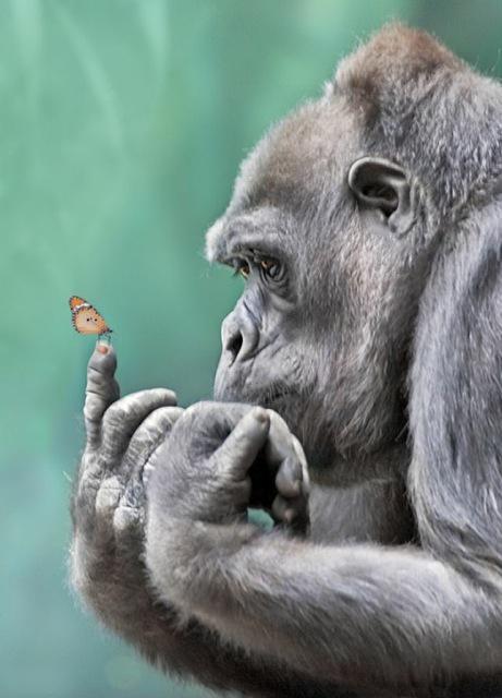 Про чувства американской обезьяны и неконкретного россиянина (Вы его знаете)