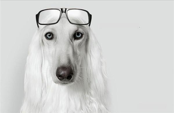 Без теории собаке никуда !