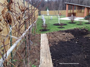 Прореживание винограда и защита голубики