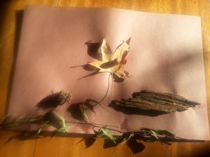 Fall art by Rosie