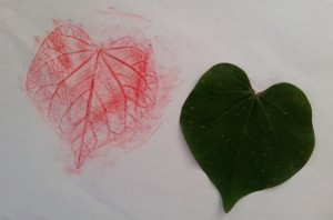 leaf_rubbing