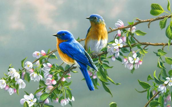 cute-birds