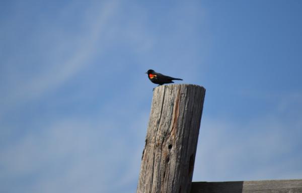 Птичка 4