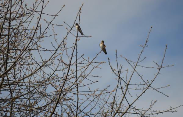 Птичка 8