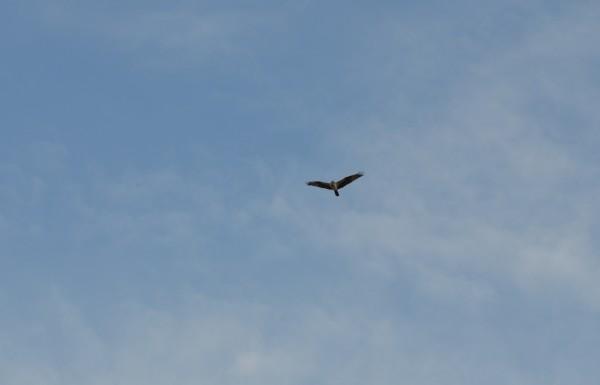 Птичка 17
