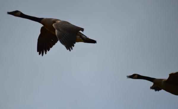 Птичка 19