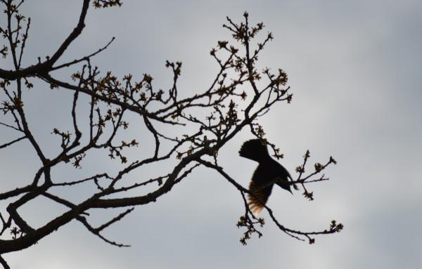 Птица 26