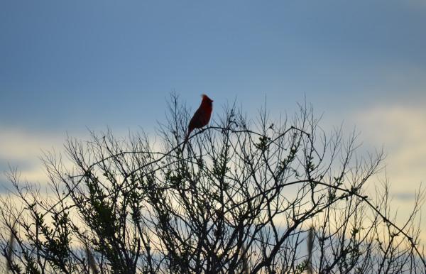 Птица 29