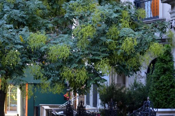 55 Вход в Дом-музей Н.К.Рериха