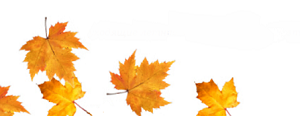 Осенние листочки!