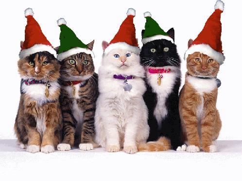 Осторожно, Кошки!