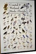 Виды птиц!