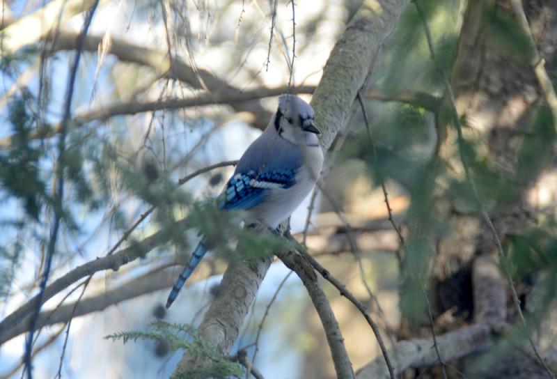 Синяя птичка!!
