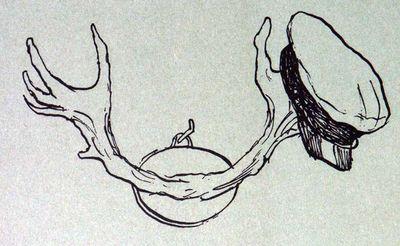 Рога и Копыта