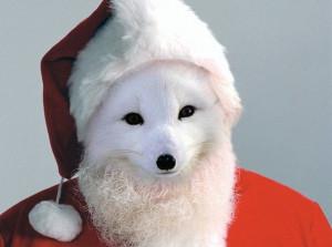 Дед Песец