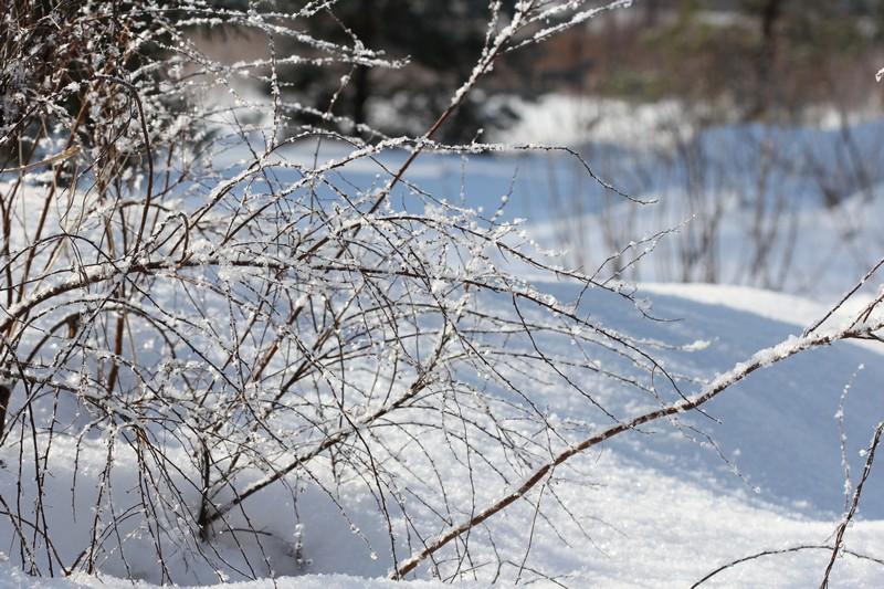 снег.2