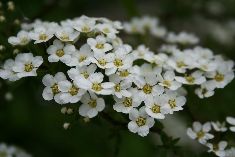 цветы3 (2)