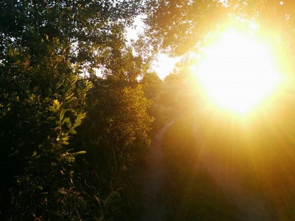 СОН и SUN (солнце). NAP [НЭП] (дрёма) и НЕБО.
