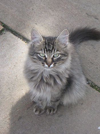 andronikov_cat