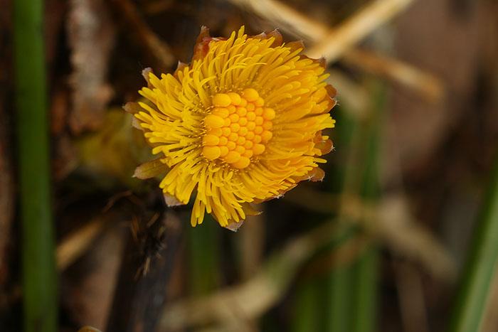 1st_flower