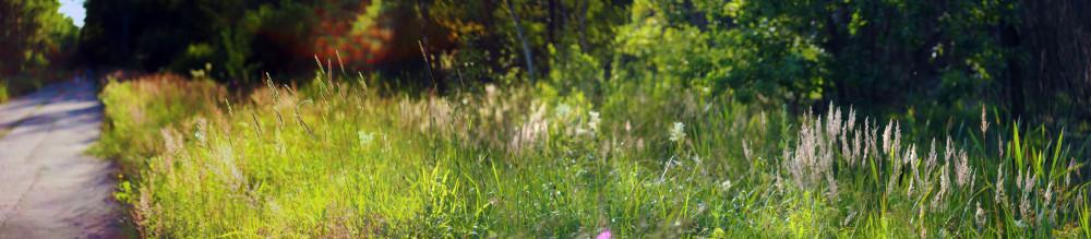 summer_grass_pan1_v1024
