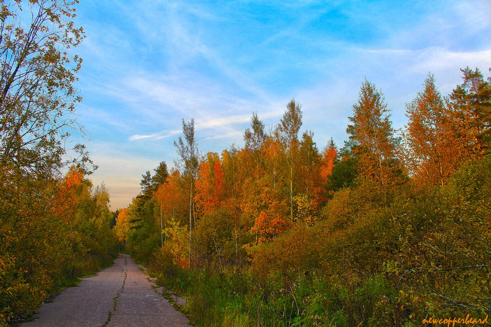 red_gold_HDR2-1280