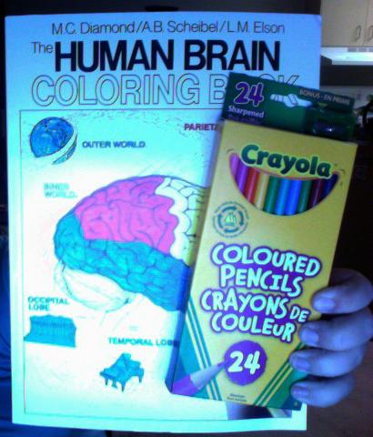 Human Brain Coloring Book and Pencil Crayons