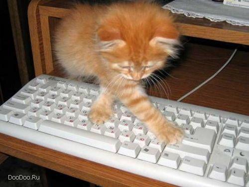 компьютер и кот