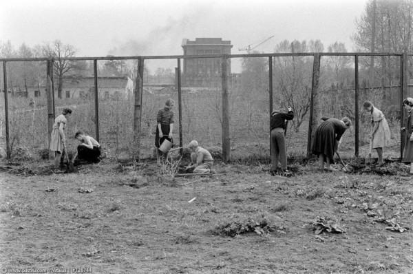 Садовый участок Дворца пионеров у Смольного монастыря, 1959 год