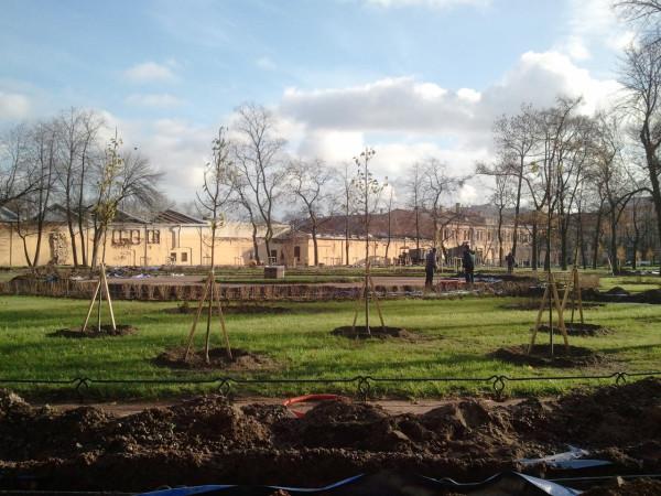 Работы по реконструкции сада, ноябрь 2013