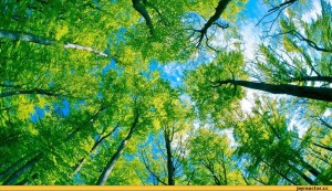 природа-лето-44124