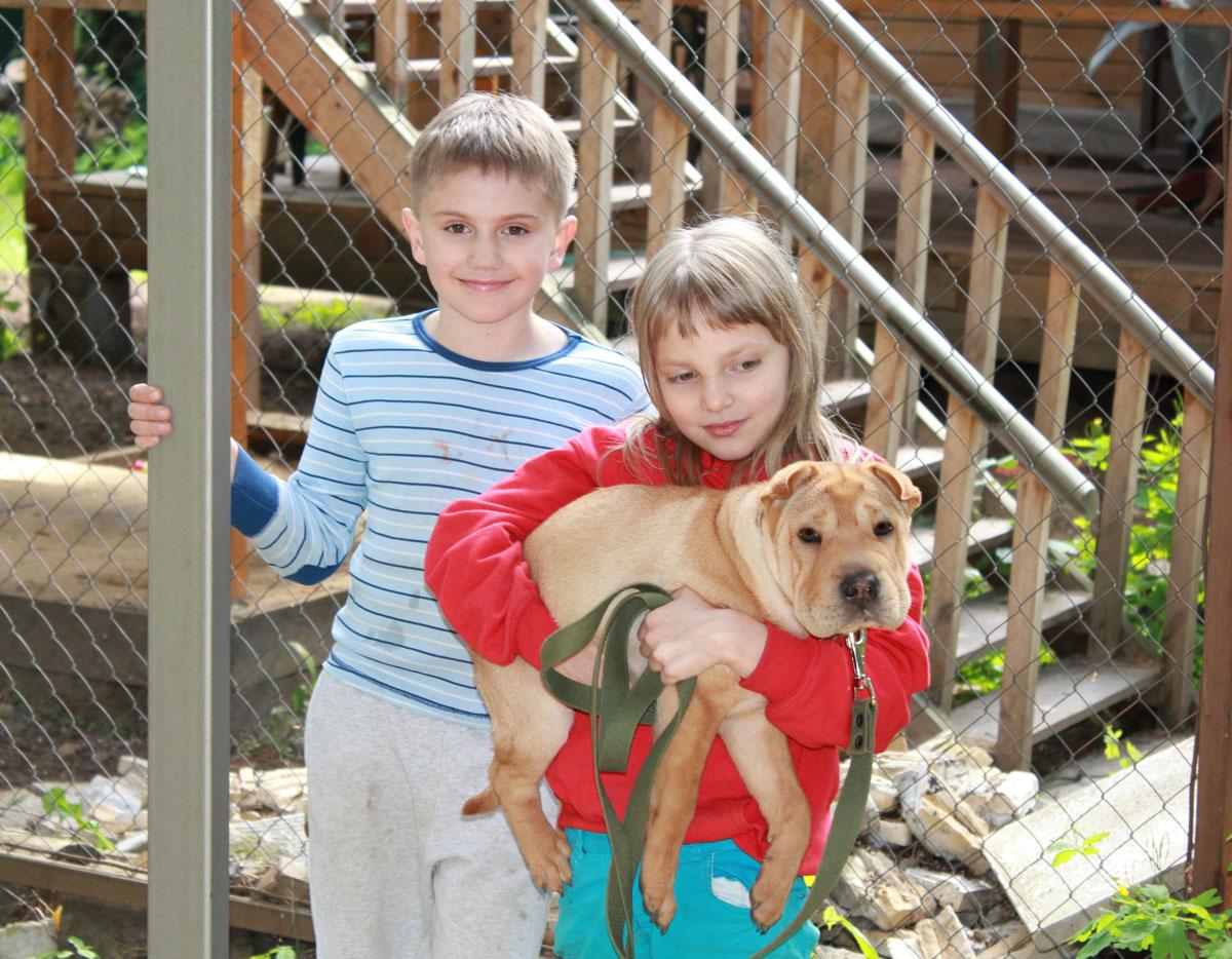 Детки и собачка