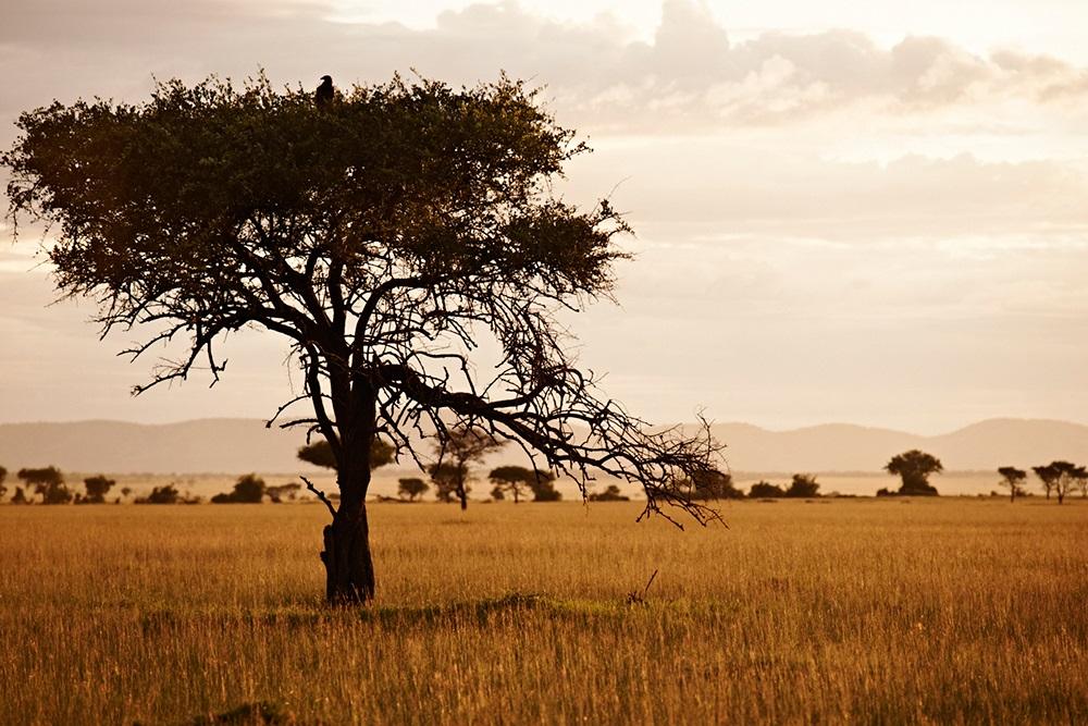 Singita-Serengeti-House-Tanzania-16