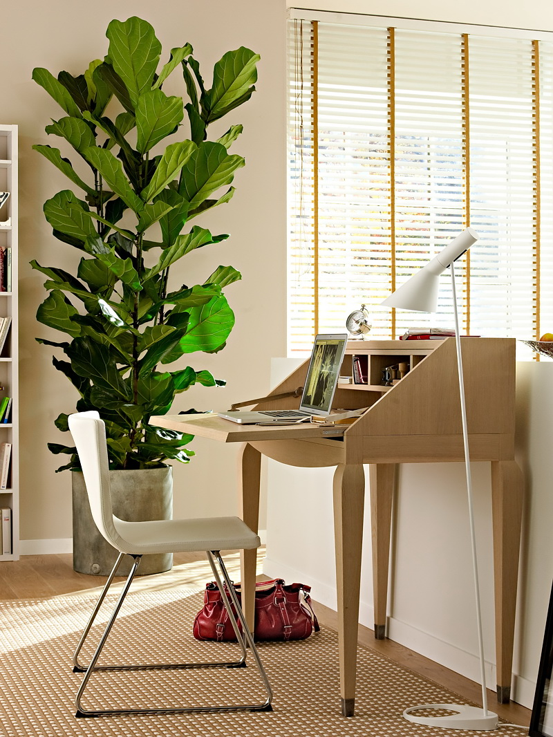 Nicety for Jardin interieur appartement